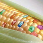 Rx Corn