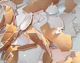 Broken Egg Shells